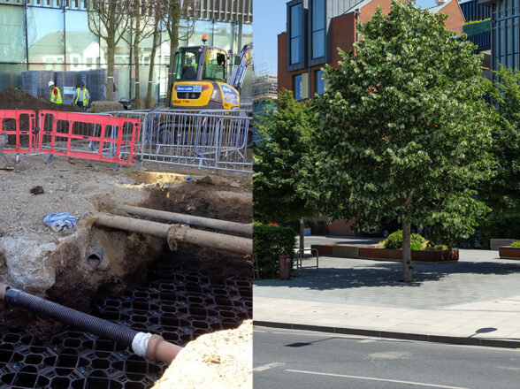 Urban Tree Planting Constraints