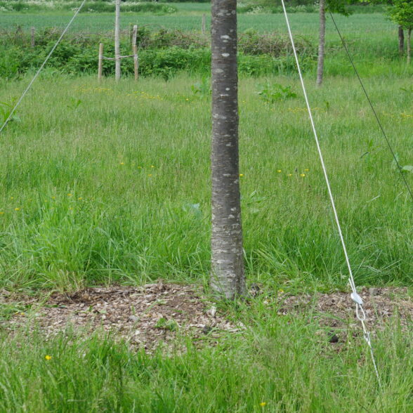 ArborGuy Overhead Guying System